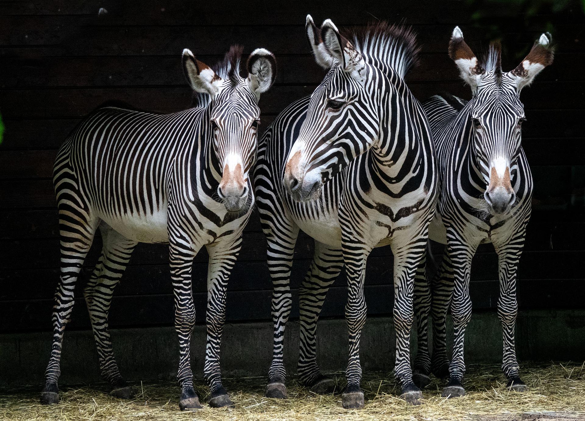 Der Reginhard-Grundschul Zoo
